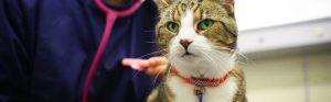 Cat with vet