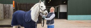 Grey horse with vet