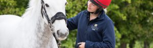 Grey horse with groom