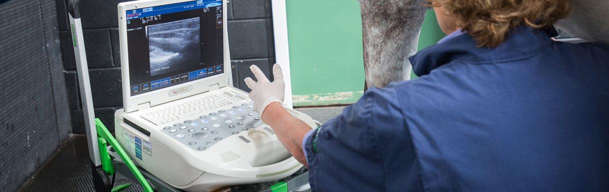 Orthopaedic scan