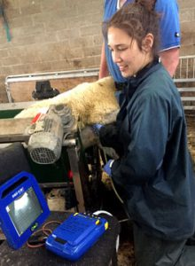 Vet scanning for Ovine Pulmonary Adencarcinoma