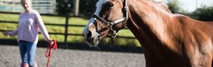 Alnorthumbria Veterinary Group, Equine Behavioural Support