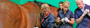 Equine Team, Alnorthumbria Veterinary Group