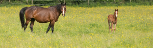Mare and foal, Alnorthumbria Veterinary Practice