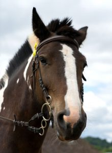Healthy brown and white horse